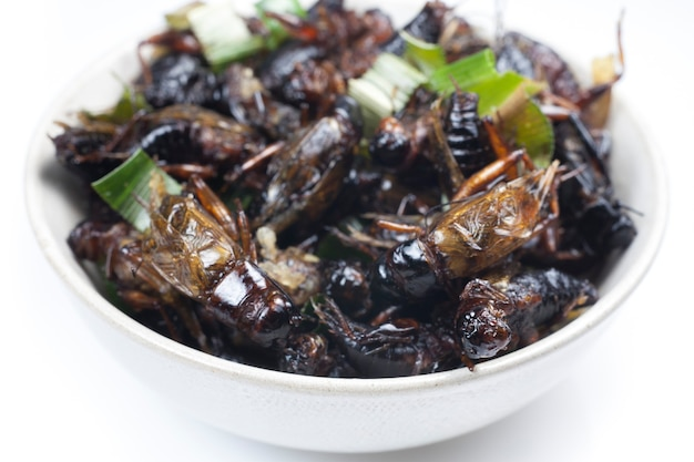 Crispy fried insects on white bowl