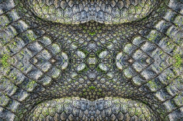 Crocodile pattern and skin