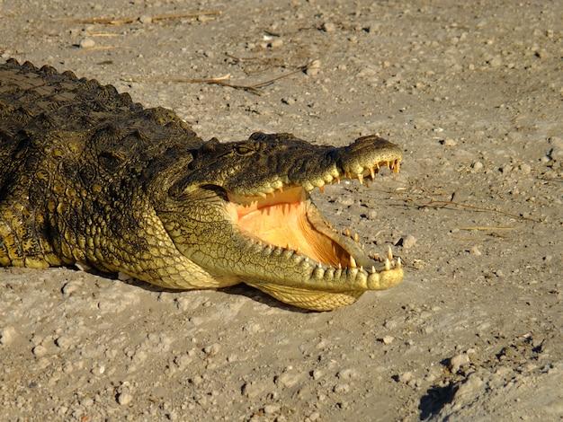 Siamese crocodiles mekong delta in vietnam | Premium Photo