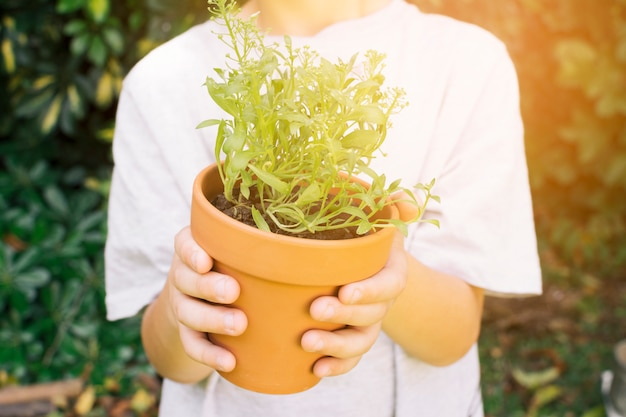 Crop child with green plant in pot