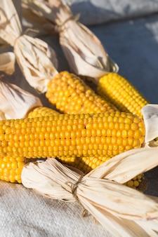 黄色の有機および新鮮なトウモロコシの熟した作物の穂軸