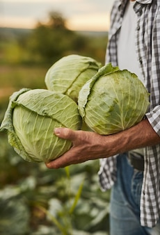 Crop farmer with fresh cabbage in countryside