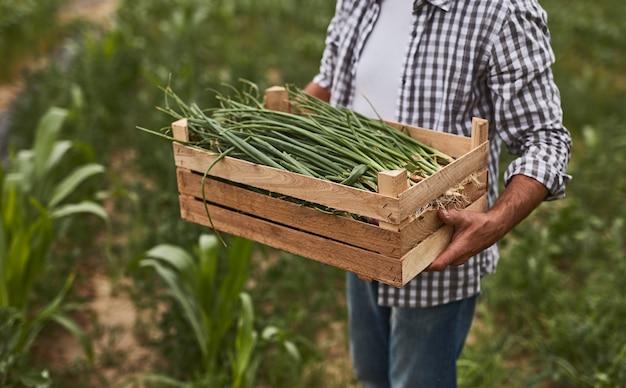 Crop farmer with green onion in box