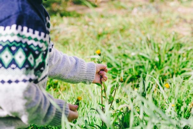 Crop girl picking flowers