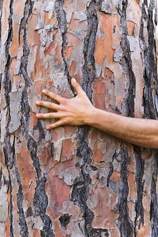 Crop hand on tree trunk