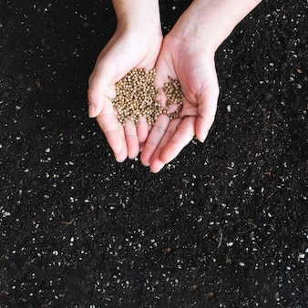 Crop hands holding seeds