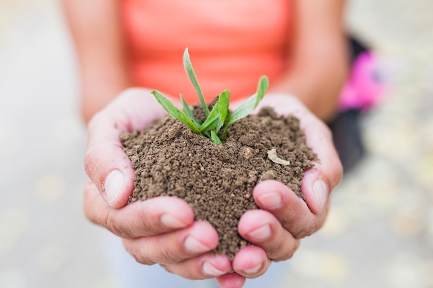 Crop hands holding soil and sprout