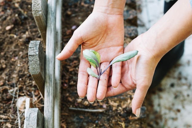 Crop hands holding sprout