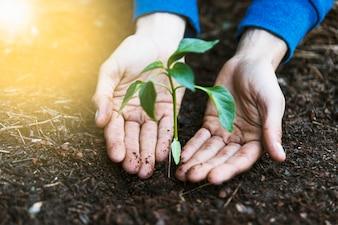 Crop hands near seedling