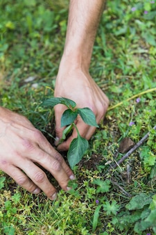 Crop hands planting seedling