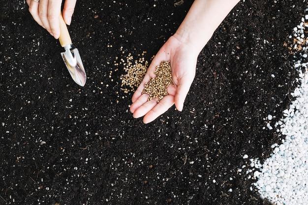 Crop hands planting seeds