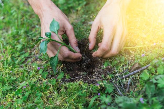 Crop hands planting sprig