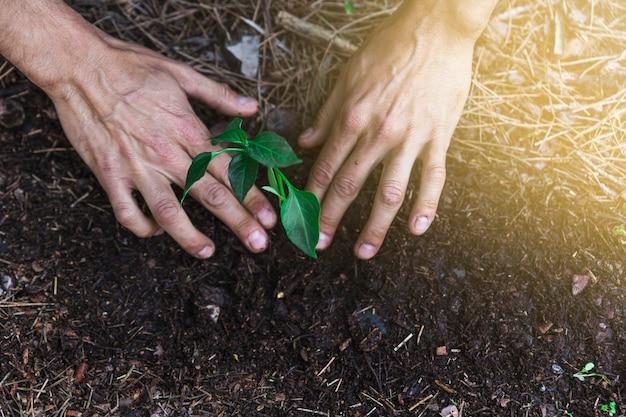 Crop hands tending sprout