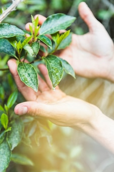 Crop hands touching leaves on shrub