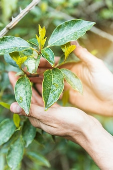 Crop hands touching shrub twigs