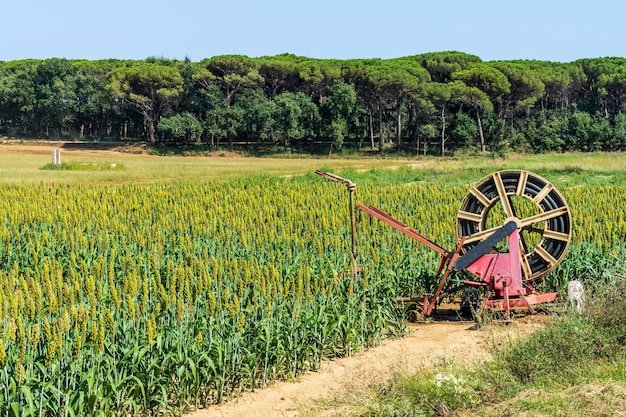 Crop irrigation system in cycling path of llagostera.