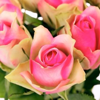 白で隔離のピンクのバラの花束の作物