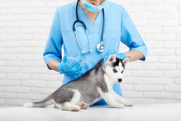 Урожай женщина-врач в синей форме, держащая маленького щенка хаски с голубыми глазами, делая инъекцию в шею с уколом. профессиональный ветеринар заботится о маленькой собачке, как волк. ветеринарная клиника.