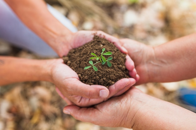 Crop people holding soil and sprout