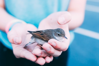 Crop person holding bird