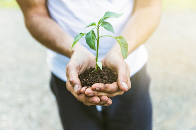 Crop person showing seedling