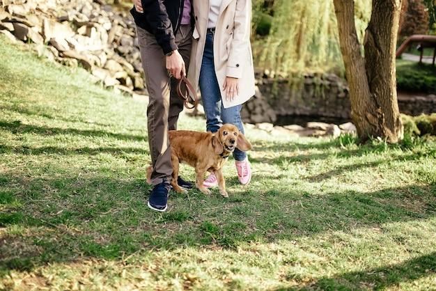 Обрезанное изображение романтической пары на прогулке по городу со своей собакой лабрадором