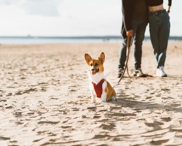 犬と一緒にビーチを歩いてロマンチックなカップルのトリミングされた画像。