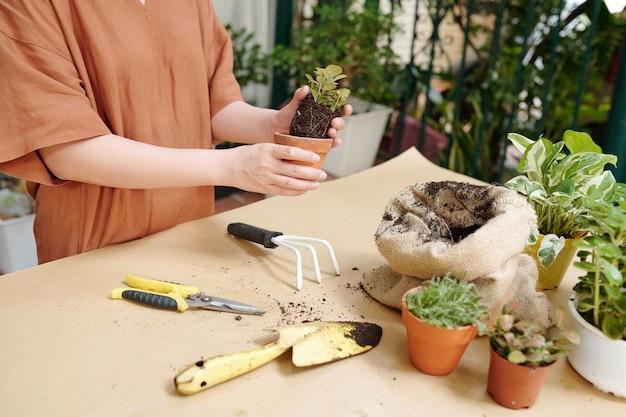 봄날 식물과 꽃을 재배할 때 원예 도구를 사용하는 여성의 자른 이미지