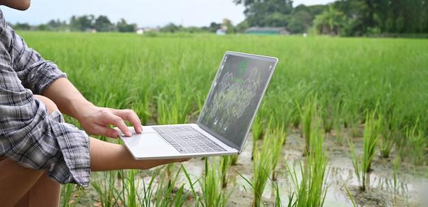 Подрезанное изображение молодого умного фермера держа компьтер-книжку компьютера с визуальным значком на экране над полем риса как предпосылка. концепция технологии сельского хозяйства.