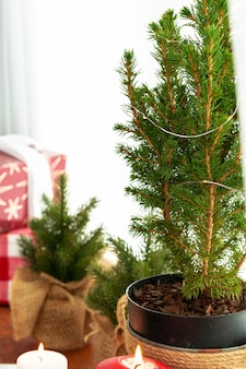 Cropped image of a small christmas tree in a pot