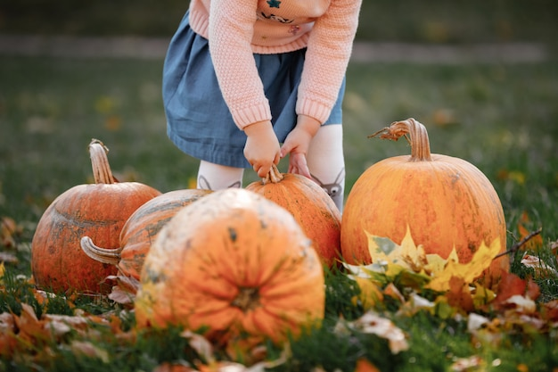Cropped photo of a little girl trying to lift a pumpkin. field with pumpkins.