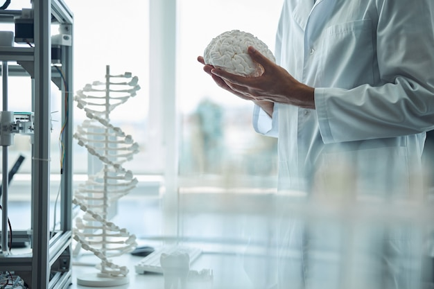 Cropped photo of a medical student holding the 3d printed brain model in both hands