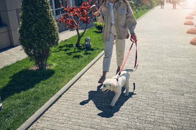 Обрезанное фото модной стройной молодой женщины, прогуливающейся по тротуару со своей собакой