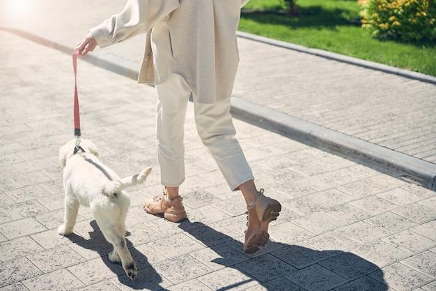 晴れた日に一緒に散歩している女性と彼女の4本足の友人のトリミングされた写真