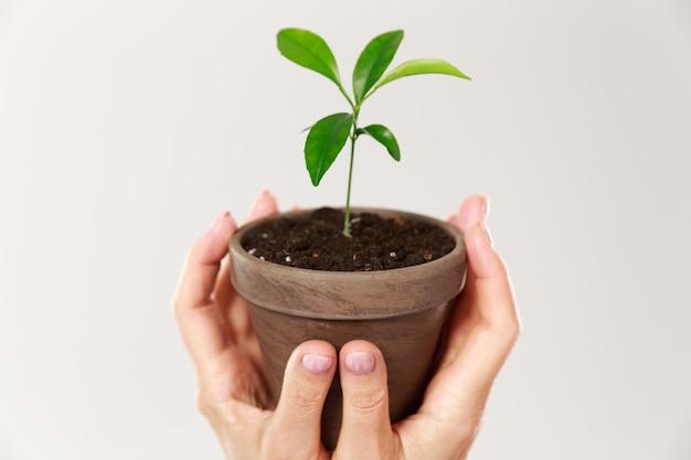 젊은 식물과 갈색 냄비를 들고 여자의 손의 자른 사진