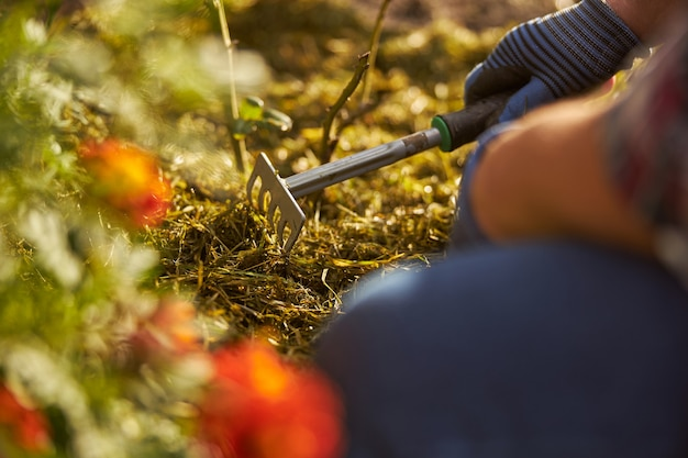 Cropped photo of a person holding a small hand rake while working in the garden