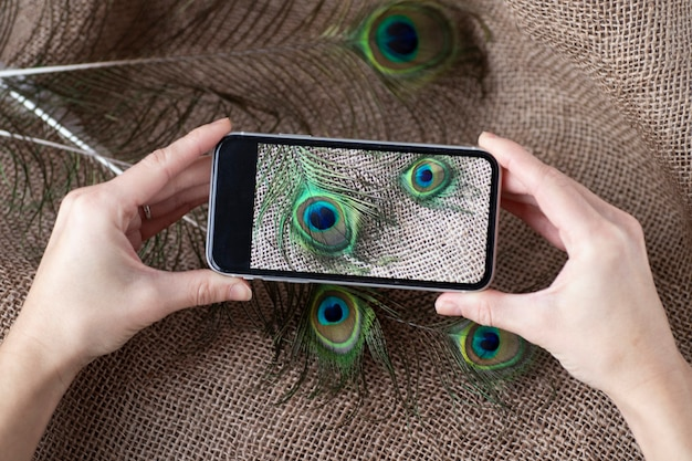 Cropped shot of man holding best smartphone holding photo of peacock feathers.
