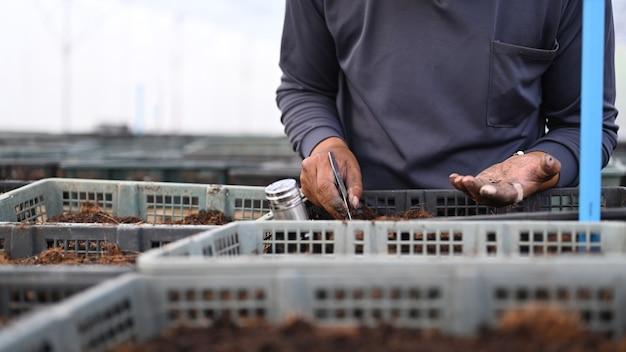 온실에 달콤한 고추 씨앗을 심는 농부 손의 자른 샷.