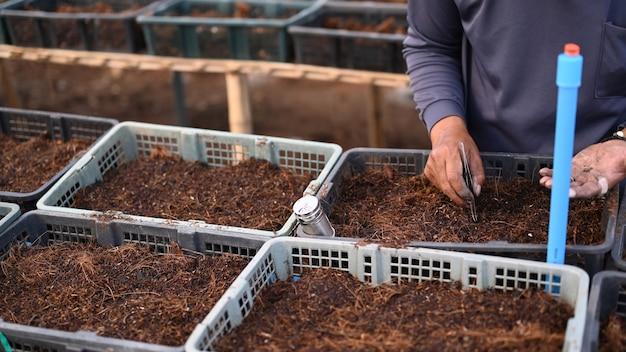 토양에 씨앗을 심는 정원사 손의 자른 샷.