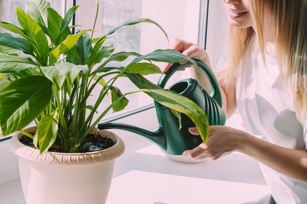 창턱 인테리어 화창한 날에 녹색 물을 수있는 화분에 집 식물에 물을주는 젊은 금발의 여자의 자른 샷