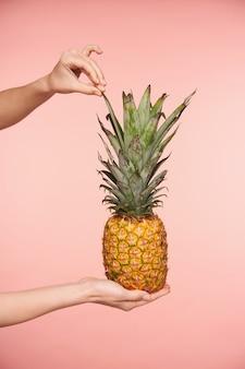 ピンクの背景に対して分離された、他の手でそれを保持しながら新鮮なパイナップルの緑の葉に触れる若い女性の手のトリミングされたショット