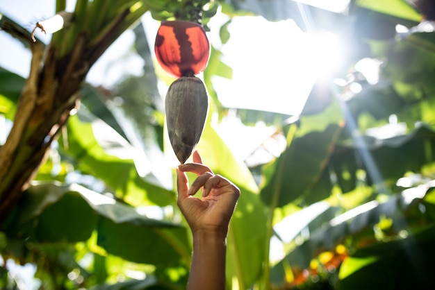 Cropped unrecognizable woman hand surrounded by banana leafs touching exotic flower hanging from a tree