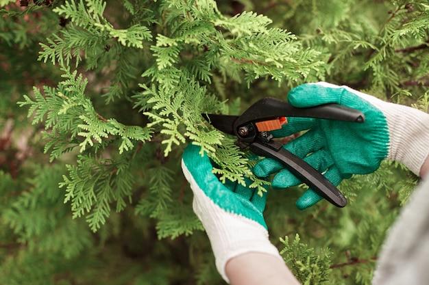 Vista ritagliata del lavoratore di giardinaggio che indossa guanti protettivi durante il taglio delle piante