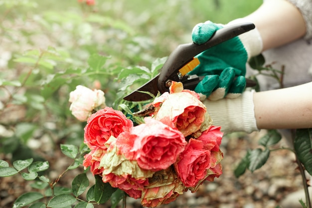 Cropped view of gardening worker wearing protective gloves while trimming plants