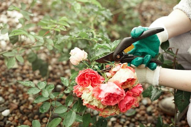 植物をトリミングしながら保護手袋を着用している園芸労働者のトリミングされたビュー