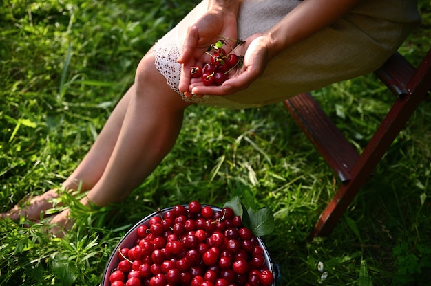 Cropped view of a woman in a linen dress sitting on a stepladder next to a bucket of cherries in the orchard and holding cherries in her hands. close-up.