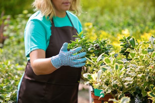 Donna potata che esamina pianta verde in vaso. giardiniere biondo irriconoscibile che coltiva diverse piante nelle serre in una giornata di sole e indossa guanti. attività di giardinaggio commerciale e concetto estivo
