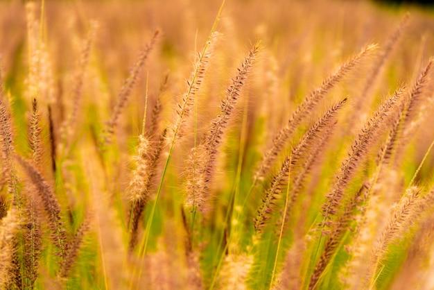 Crops flora
