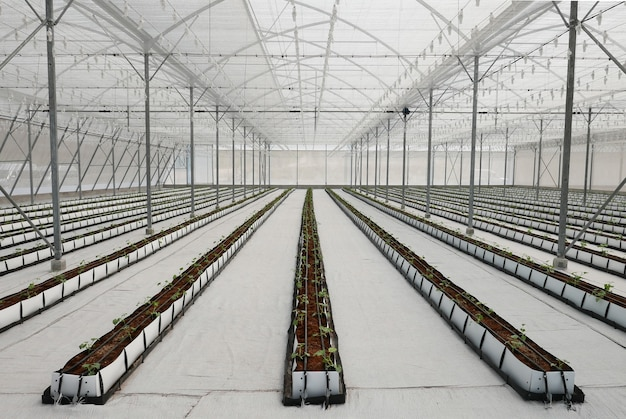 Crops in greenhouse.