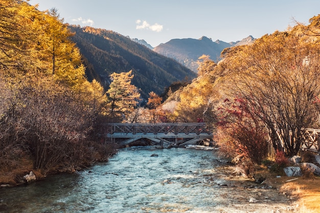 Cross bridge in golden pine forest in valley at yading